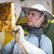 Beekeeper working in an apiary holding a frame of honeycomb — Stock Photo