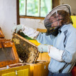 Beekeeper working in an apiary holding a frame of honeycomb — Stock Photo #8520725