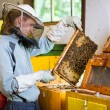 Stock Photo: Beekeeper working in apiary holding frame of honeycomb