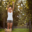 Young woman picking apples from an apple tree — Stock Photo #8520729