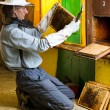 Stock Photo: Beekeeper by an apiary observing carefully his bees