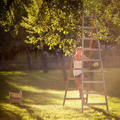 Young woman up on a ladder picking apples from an apple tree — Стоковое фото