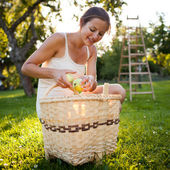 Young woman collecting apples in an orchard — Stock Photo