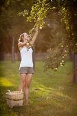 年轻女子摘苹果从一棵苹果树 — 图库照片