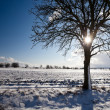 Lovely winter landcape on a sunny winter day — Stock Photo