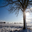 Lovely winter landcape on a sunny winter day — Stock Photo #9389055