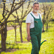 Portrait of a senior gardener in his garden/orchard — Stock Photo #9557188