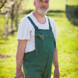 Portrait of a senior gardener in his garden/orchard - Stock fotografie