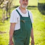 Portrait of a senior gardener in his garden/orchard — Stock Photo