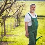Portrait of a senior gardener in his garden/orchard — Stock Photo #9557216