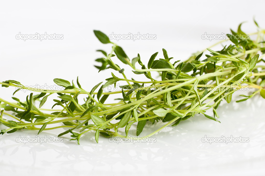 Fresh green basil isolated on white  Stock Photo #9557341