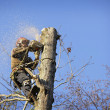Stock Photo: Arborist cutting tree