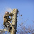 Arborist cutting tree - Stock Photo