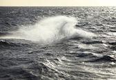 Whale — Stock Photo