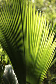 Palm leave — Stock Photo