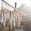 Salted fishes under sunlight — Stock Photo