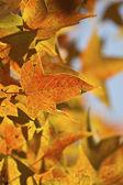 Outono folhas amarelas fundo — Fotografia Stock