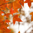 Red leaves in autumn forest — Stock Photo
