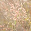 Grasses with pink flowers under sunset — Stock Photo