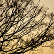 Autumn tree branches at sunset — Stock Photo