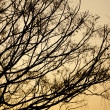 Stock Photo: Autumn tree branches at sunset