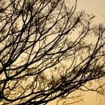 Autumn tree branches at sunset — Stock Photo