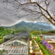 Greenhouse in countryside of Hong Kong, HDR image. — Foto Stock