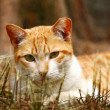 A cat on grasses — Stock Photo