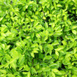 Green leaves on the ground background — Stock Photo #8924628