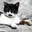 A cat sitting on rocks - Stockfoto