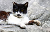 A cat sitting on rocks — Stock Photo