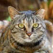 A cat with sharp eyesight - Foto Stock