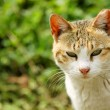 A cat looking — Stock Photo #9031369