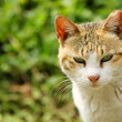 A cat looking - Foto Stock