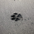 Dog foot print on sand — Stock Photo