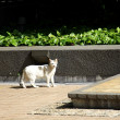 Cat under sunshine — Stock Photo #9068273