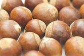 Chestnut isolated on white background — Stock Photo