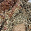 Stock Photo: Sedimentary rocks in Hong Kong Geo Park