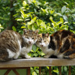 Cats looking at enemy — Stock Photo #9144044