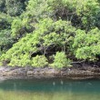 Wetland in Hong Kong — Stock Photo #9144879