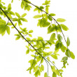 Green leaves background — Stock Photo #9261548
