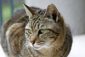 Cat with sharp eyesight looking at something — Stock Photo