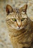 A cat close-up. — Stock Photo
