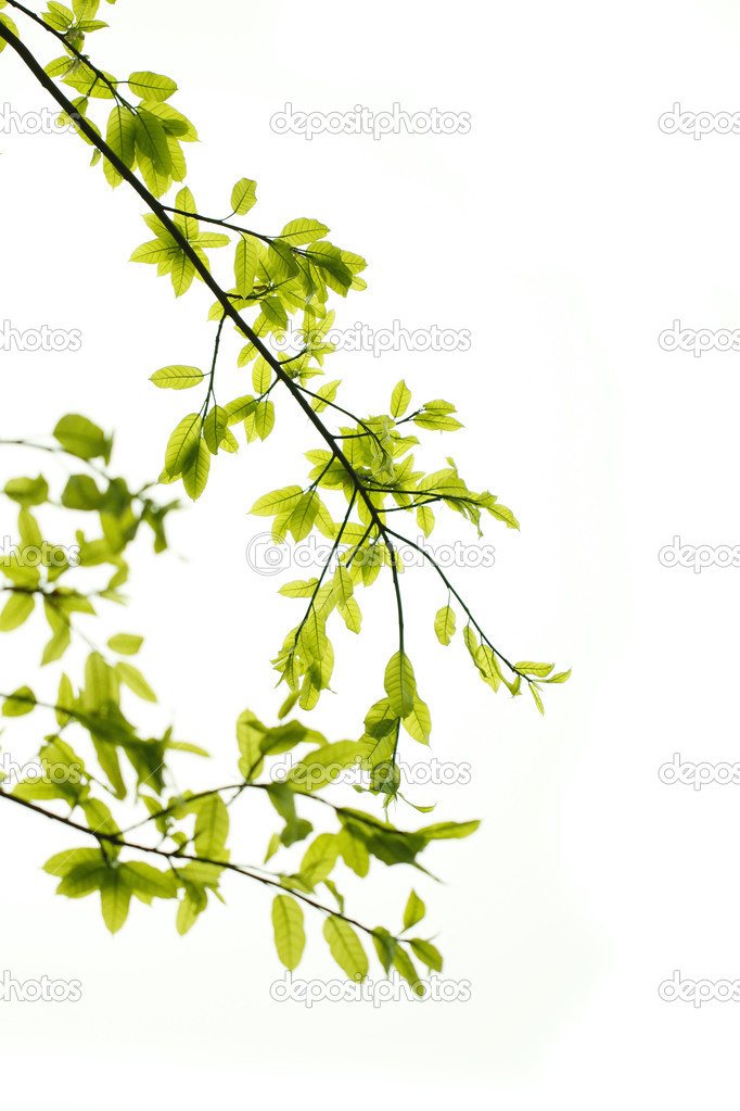 Green leaves background — Stock Photo #9261552