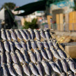 Salted fishes under sunshine in Hong Kong - Stock fotografie