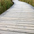 Path in wetland — Stock Photo #9396699