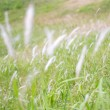 Moving grasses on ground — Stock Photo #9396754