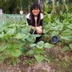 Asian woman in farmland — Stock Photo #9397671