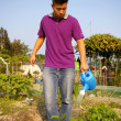 Asian man watering crops in farmland — Stock Photo