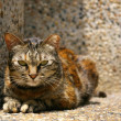 A cat on the ground — Stockfoto